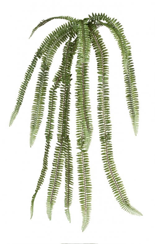 fern fish bone bush artificial hanging green